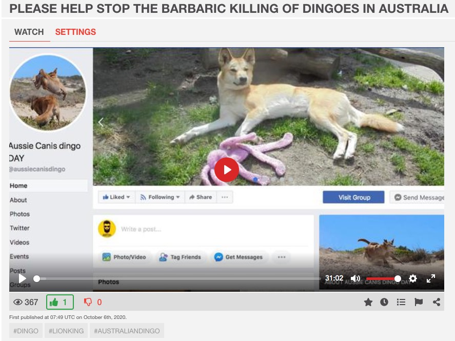 Save the Australian Dingo